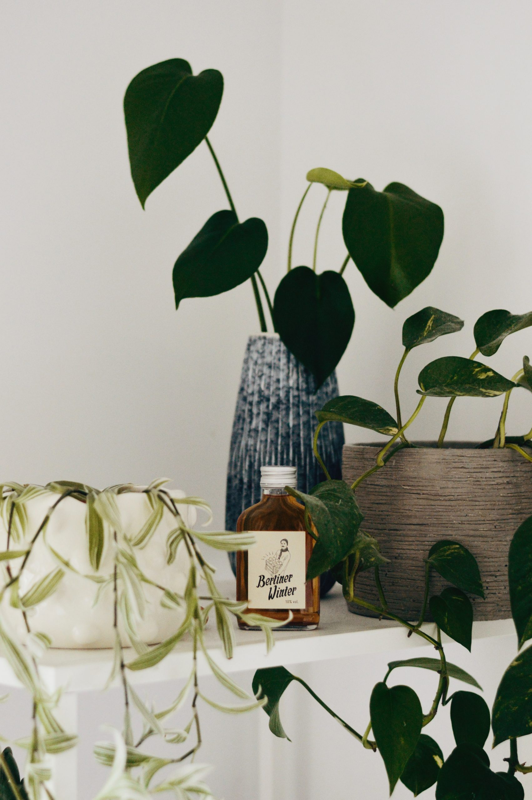 Add houseplants To Your Home For A Better Winter